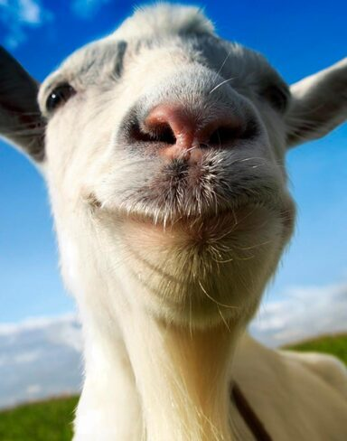 Testando Goat Simulator | StormPlay #3